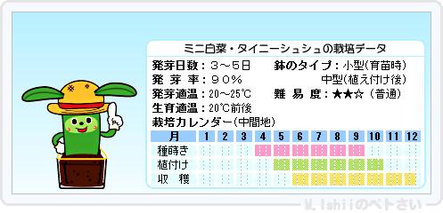 ペトさい(ミニ白菜)17