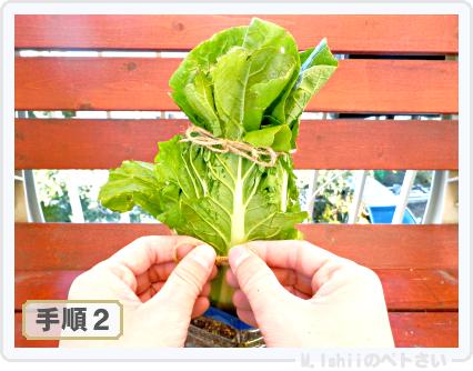 ペトさい(ミニ白菜)48