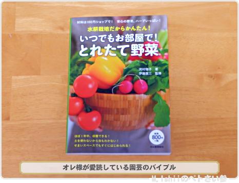 ミニ白菜01