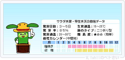 ペトさい(サラダ水菜)20