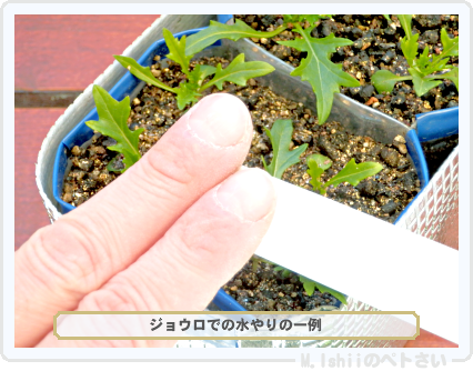 ペトさい(サラダ水菜)34