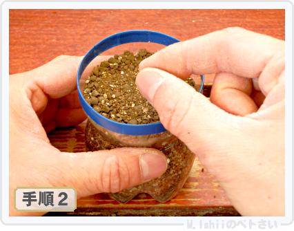 ペトさい(サラダ水菜・改)07