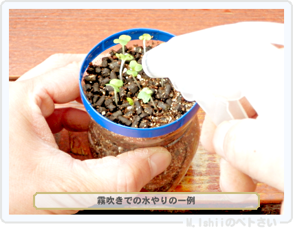 ペトさい(サラダ水菜・改)14
