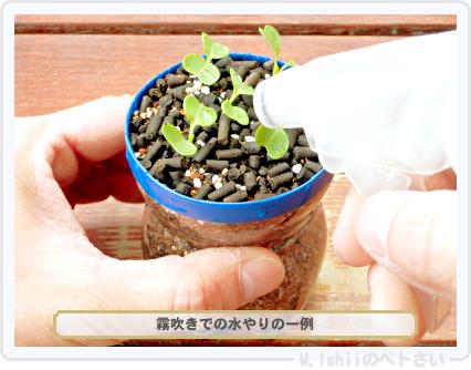 ペトさい(サラダ水菜・改)19