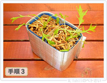 ペトさい(サラダ水菜・改)35