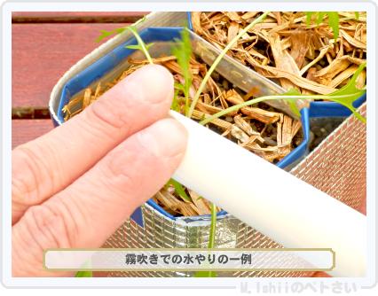 ペトさい(サラダ水菜・改)37