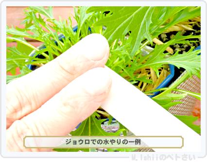 ペトさい(サラダ水菜・改)41