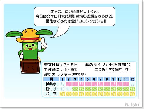 ペット栽培III(わさび菜)50