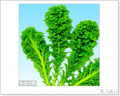 ペット栽培III(わさび菜・改)03
