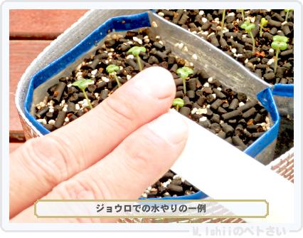 ペトさい(わさび菜・改)19