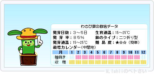 ペトさい(わさび菜・改)20