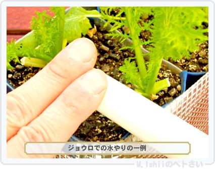 ペトさい(わさび菜・改)59
