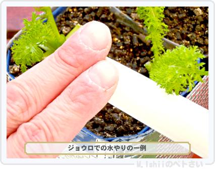 ペトさい(わさび菜・改)70