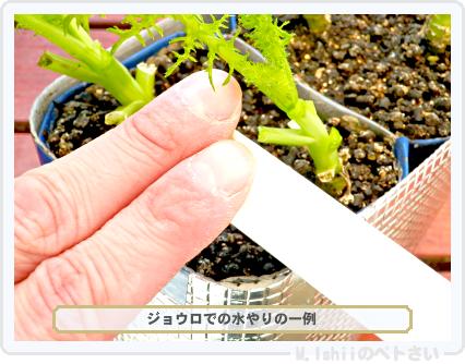 ペトさい(わさび菜・改)86