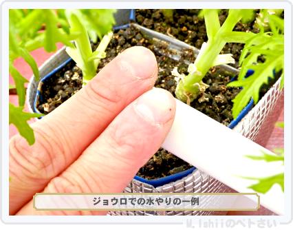 ペトさい(わさび菜・改)89