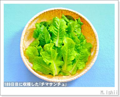 ペット栽培III(チマサンチュ)64