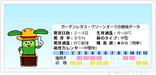 ペトさい(ガーデンレタス)09