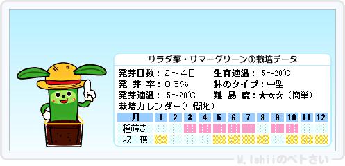 ペトさい(サラダ菜)12