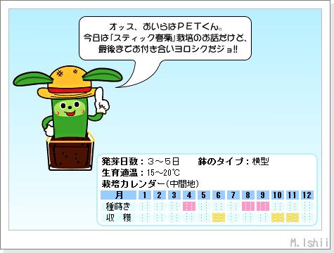 ペット栽培III(スティック春菊)25