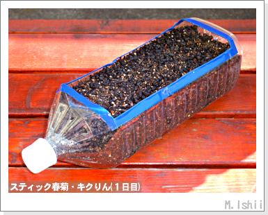 ペット栽培III(スティック春菊)26