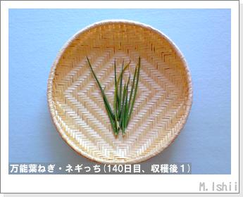 ペット栽培II(万能葉ねぎ)32