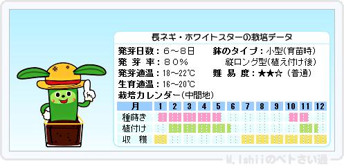 ペトさい(長ネギ)15