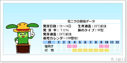 ペット栽培III(花ニラ)02