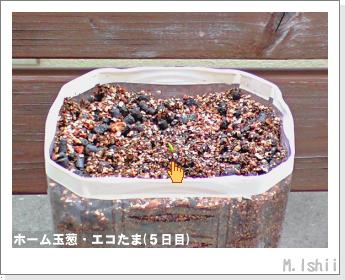 ペット栽培II(ホーム玉葱)05