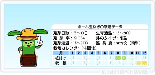 ペトさい(ホーム玉ねぎ)16