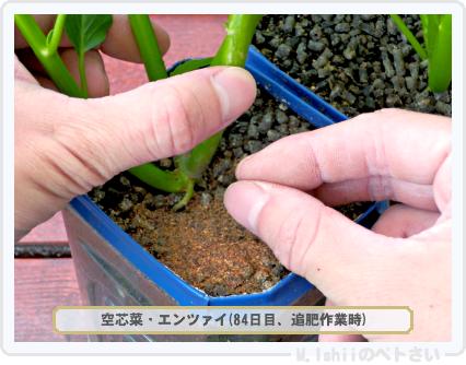 ペトさい(空芯菜)62