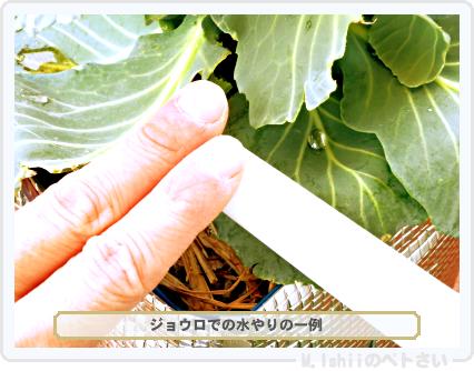 ペトさい(キャベツの芯)69