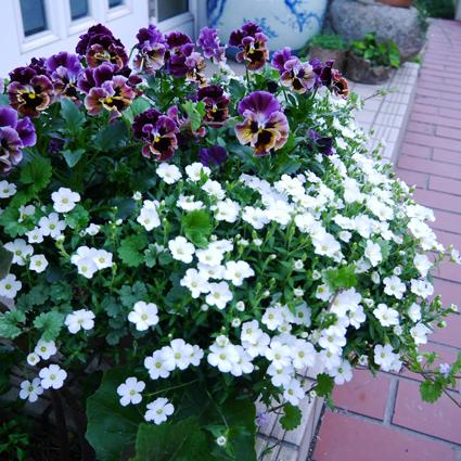 170313_1_white_flower.jpg