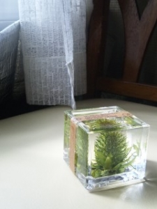 botanical water cube