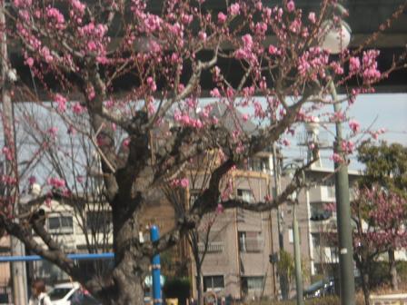 2 公園の桃の木