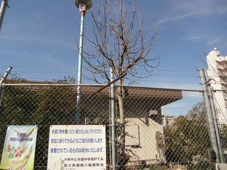 3 白木蓮の木