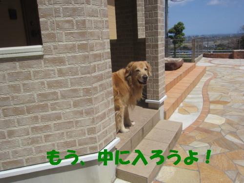 IMG_3740.jpg
