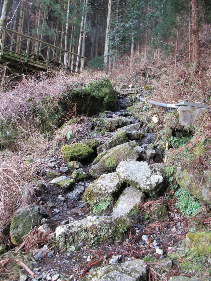 170304岩ワキ (2)