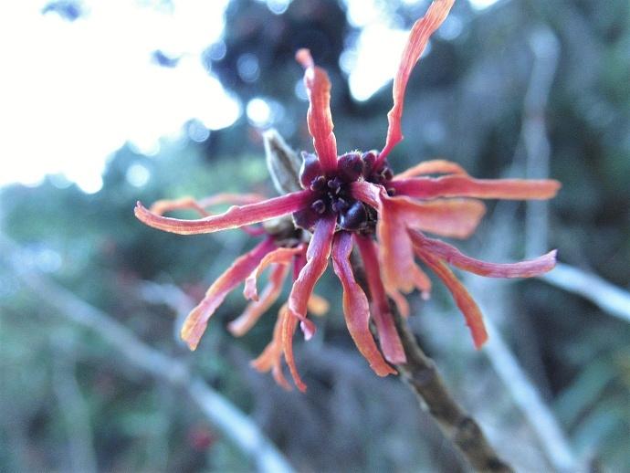 170304春の花2 (2)