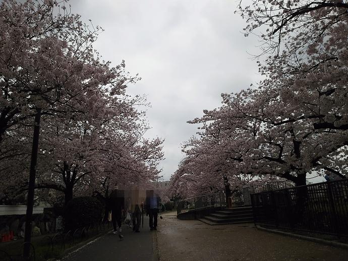 170409花mi (2)