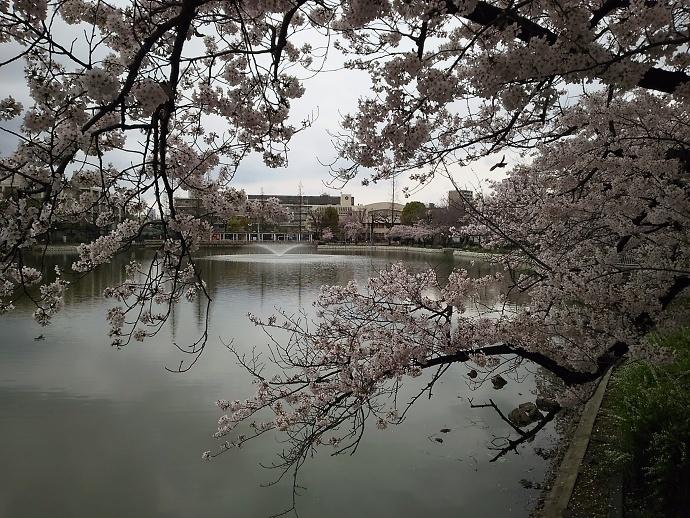 170409花mi (6)