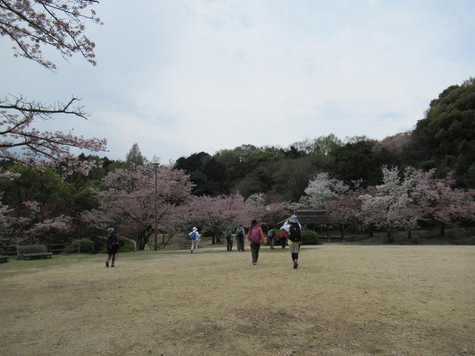 170415甲桜 (2)
