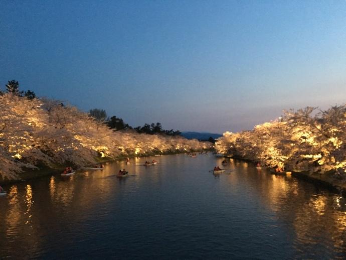 170430弘前桜 (3)