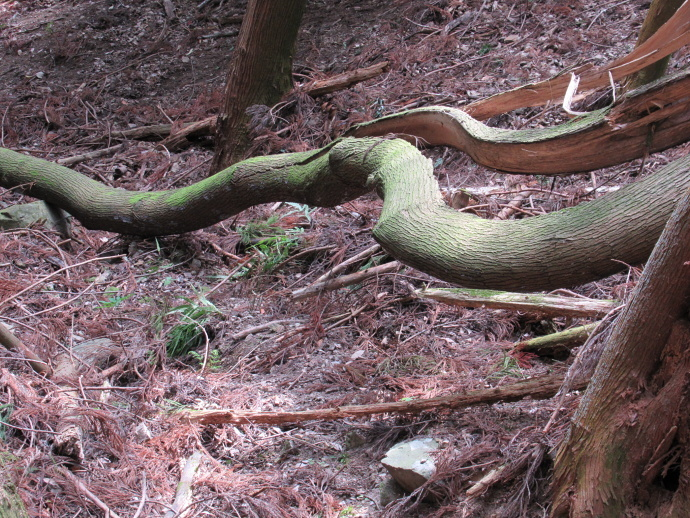 170422大蛇 (2)