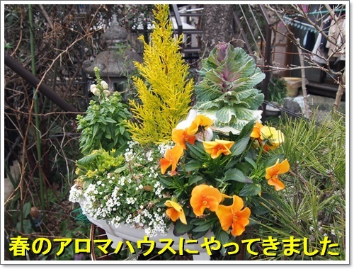 20170308_037.jpg