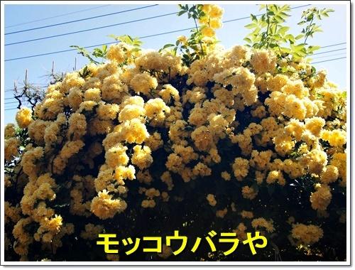20170430_083.jpg