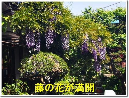 20170430_085.jpg
