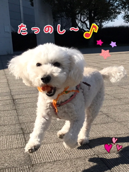 2017ふゆ1