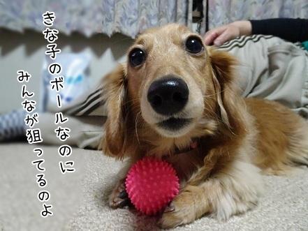 kinako6692.jpg