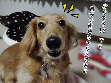 kinako6699.jpg