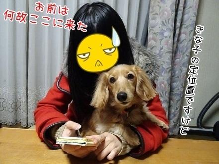 kinako6704.jpg